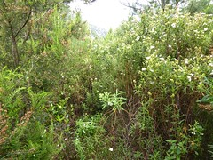 Sente RG du ruisseau de Sainte-Lucie : état possible de la piste