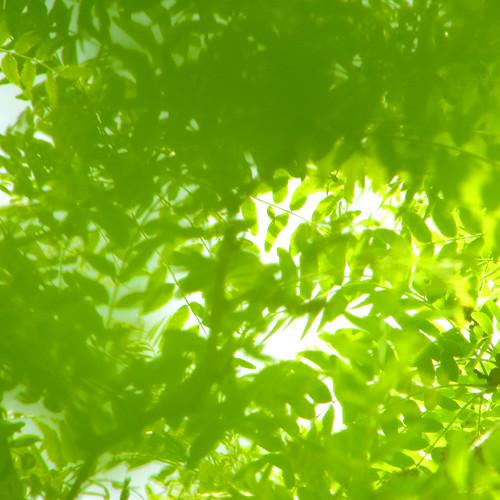 green {3}