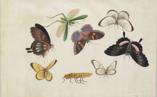 Butterfly Album g
