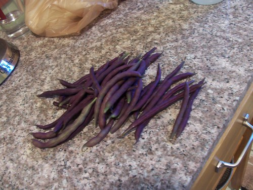 louisiana purple pod peas