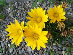 aiuole (fotomie2009 OFF) Tags: flowers flores fleurs flora fiori