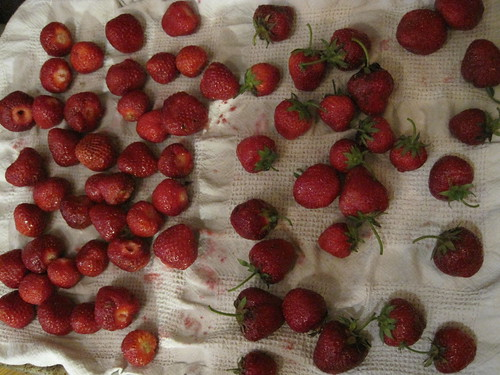Drying & Hulling the Strawberries