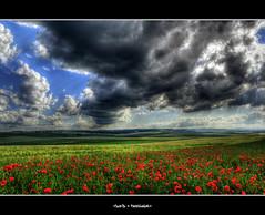 34 rue des nuages 80800 corbie [EXPLORED] (keoch (Very Busy)) Tags: storm france nikon ciel poppy 24mm nikkor nuage paysage