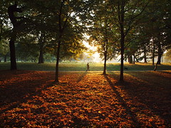 Sefton Park (SomeDriftwood) Tags: england liverpool autumnleaves seftonpark citypark yellowlight longshadows walkingthedog autumnlight longlight autumnmist silhouettedogwalker