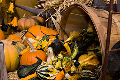 Fall Gourds 0838 (casch52) Tags: winter fall gourds canon photo corn basket pumpkins harvest straw gourd photograph squash 28l 50d 2880