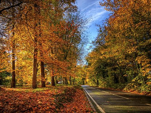 Winchester Autumn Colour