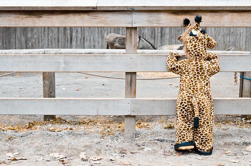 halloween-zoo-portraits-10