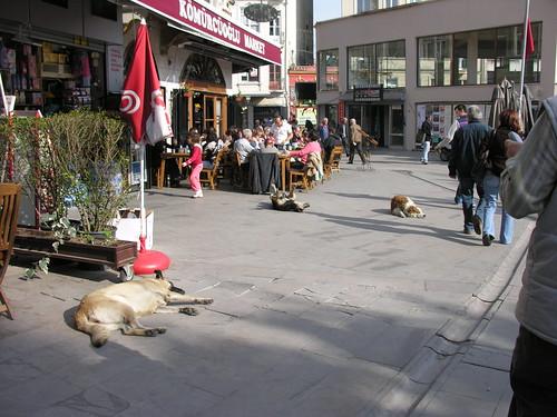 Kutyák is kint hevernek a napon