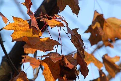 45/52: telephoto leaves