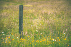 My favorite kind of fence... (MontanaRoots (aka Craig)) Tags: fence barbed field meadow nature grass canon markiv washington flowers peaceful wire