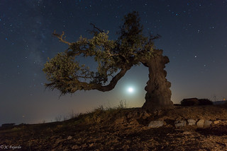 El olivo y la luna / The olive tree & tha moon