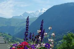 Hauteluce (Savoie) (bernarddelefosse) Tags: hauteluce savoie rhônealpes montblanc fleurs
