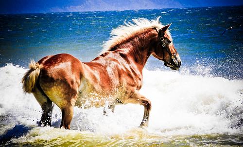 フリー画像| 動物写真| 哺乳類| 馬/ウマ| 海の風景|       フリー素材|