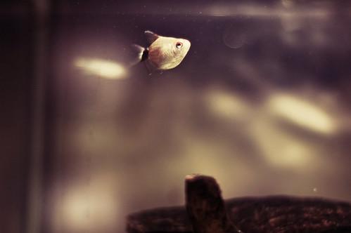 new fishy's