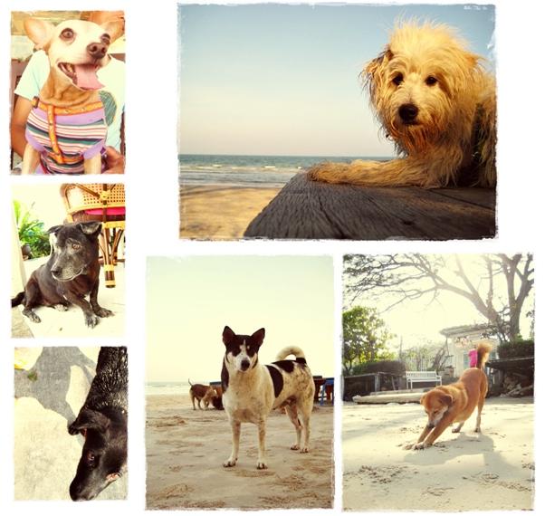HuaHin Trip: Cute dogs I met