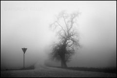 foggy road (andreas gessl) Tags: road street bw white black tree fog austria nebel path foggy andreas upper sw weiss schwarz twop gessl andreasgessl
