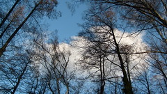 Cloud trees (ruxandra2009) Tags: blue trees cloud high nice forrest calm