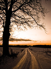 Winter road (raphic :)) Tags: road winter sunset sky brown snow tree nature way dirty pole zima droga nieg przyroda drzewo niebo zachdsoca brz lubelskie raphic fz8 dmcfz8 theunforgettablepictures tup2 artofimages bestcapturesaoi mygearandmepremium mygearandmebronze mygearandmesilver mygearandmegold wierzchoniw mygearandmeplatinum mygearandmediamond