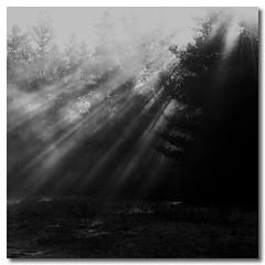 so far, (Sam Ilić) Tags: light white forest canon woods shadows australia balck canberra dust 450d canon24105mm4