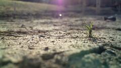 http://farm5.static.flickr.com/4006/4259826230_d45d5cc0fd_m.jpg