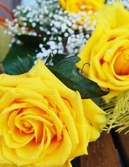 a volte qualche piccola sorpresa ti cambia la giornata... :-) (Annutcha) Tags: roses flower rose yellow photo giallo fiori distillery gf effe annutcha