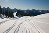 Ski tracks above Alta Vista (hishma) Tags: snow skiing mountrainier mountrainiernationalpark washingtonstate mountsthelens altavista skitracks cascademountains thecastle backcountryskiing pinnaclepeak skimountaineering tatooshrange leicam8 plummerpeak lanepeak southcascades elmaritm12828mm wapenayopeak