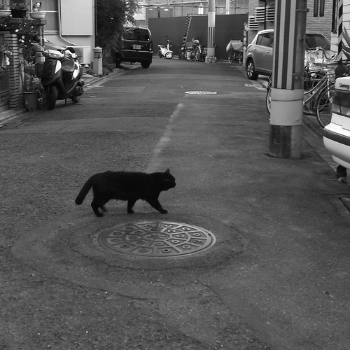 Today's Cat@2010-01-14