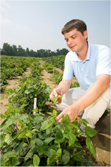 ARS Geneticist David Hyten harvests leaf tissue from one of many plant progenies derived from the cross of the soybean cultivar Williams 82 with a wild soybean.