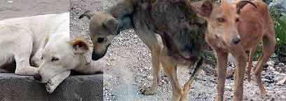 Kinship Circle - 2010-01-14 - Haiti Earthquake - Animal Responders On Alert 04 by smiteme