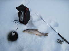Lake Trout, Fish Finder and Fishing Rod (fethers1) Tags: fishing icefishing laketrout williamsforkreservoir