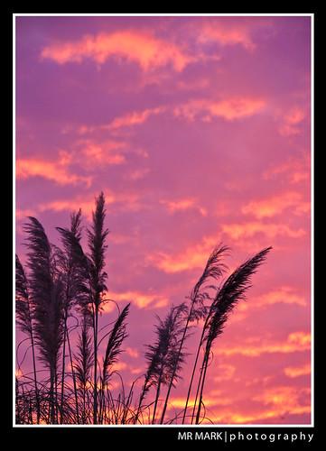 Alpharetta Sunset (January 11, 2010)