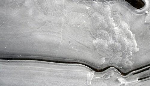 2010 janvier 19 Bords de chemin gelé (12)