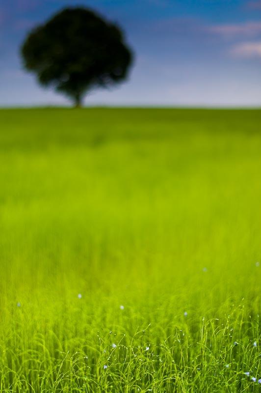 http://farm5.static.flickr.com/4006/4290925845_ebfbba621b_o.jpg
