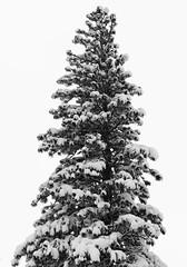 IMG_0834 (Good Ol' Charlie Brown) Tags: snow tahoe laketahoe sethhall