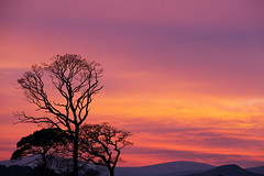 Red sky at night... (turgidson) Tags: trees ireland sunset red sky macro silhouette canon studio lens eos zoom full telephoto developer sp ii frame di if pro 5d fullframe dslr tamron wicklow 70200 f28 mk bray ld markii silkypix 50club img1302 tamronspaf70200mmf28dildifmacro canoneos5dmarkii 41300 af70200mm canoneos5dmkii silkypixdeveloperstudiopro41300