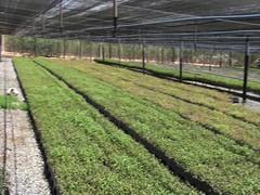 """Seedlings under irrigation <a style=""""margin-left:10px; font-size:0.8em;"""" href=""""http://www.flickr.com/photos/47172958@N02/4327828176/"""" target=""""_blank"""">@flickr</a>"""