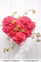 Dazzling carnation heart design for Valentine's day (L'esprit Sud Magazine) Tags: pink flowers wedding floral design heart shaped valentine fresh romantic carnation sweetheart centerpiece valentinesday hotpink floraldesign centerpieces flowerdesign onlinemagazine heartshapeddesign thestylishbloom wwwthestylishbloomcom dazzlingflowerideas