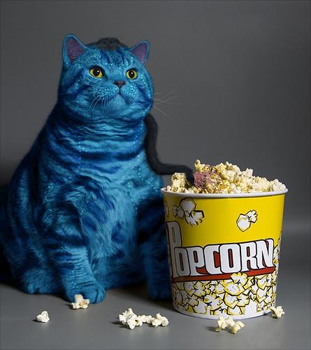avatar cat funny pic