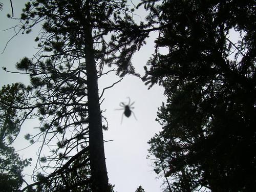 4347918448 cbbd048ac1 2010.02 herbal spider bite remedies