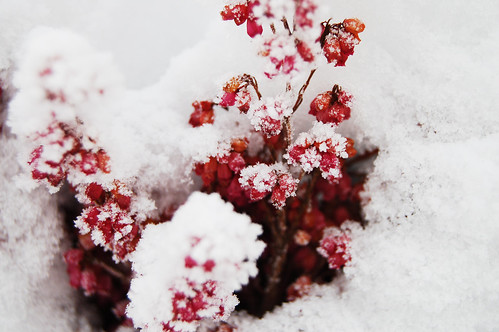 Pink details in snow 2 (Photo by iHanna - Hanna Andersson)