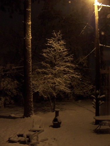 the backyard at 10:30 PM (taken from inside)