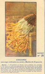 legume21 chicoree
