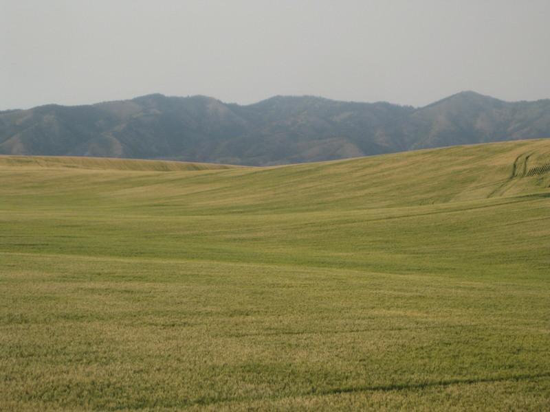 Fuzzy Field