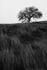 Wind-swept California Hills (dwinning) Tags: california park winter sky bw white black tree grass fog oak flora state wind slope pacheco pachecostatepark
