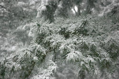 Snow 2010