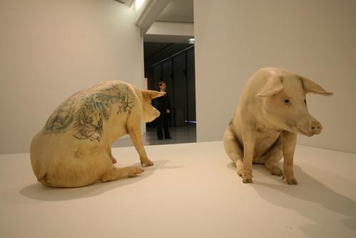 IMG_4256 Wim Delvoye's tattooed pigs