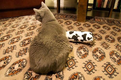 Kissa takaa, kissa makaa