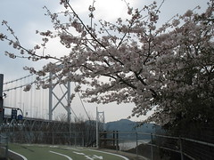 2518 Bridge in Bloom (mari-ten) Tags: bridge tree nature japan geotagged cycling spring hiroshima walkway  cherryblossom  2008 onomichi eastasia  shimanami    18  200804  20080402 innoshimabridge seishun18travel mukaiisland geo:lat=34360646 geo:lon=133186719