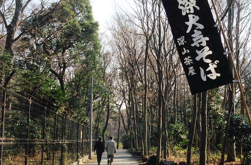 jindaiji tree