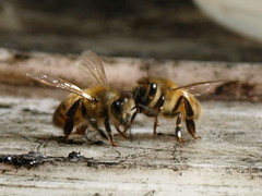 Conspiring Bees